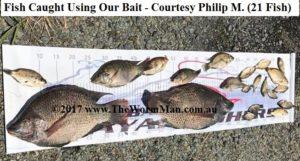 21 Fish - Courtesy Philip Mainwaring - Fish Caught Using My Bait Worms