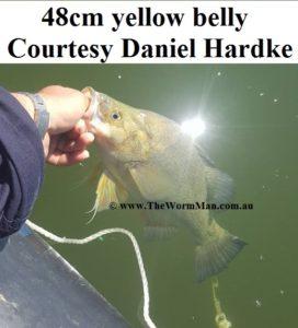 48cm yellow belly - Courtesy Daniel Hardke  - Fish Caught Using My Bait Worms