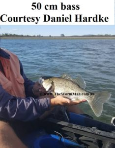 50 cm bass - Courtesy Daniel Hardke - Fish Caught Using My Bait Worms
