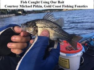 Bass - GCFF Pest Fishing Day - Courtesy Michael Pitkin - Fish Caught Using My Bait Worms