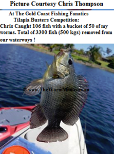 GCFF Tilapia Busters Comp - Courtesy Chris Thompson - Fish Caught Using My Bait Worms