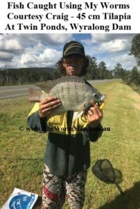 Fish Caught Using My Worms - Courtesy Craig - 45 cm Tilapia - Twin Ponds Wyralong Dam wm