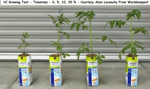 VC Growing Test - Tomatoes - 0 5 10 20 PC - Courtesy Alain Lavanchy  wurmkompost wm