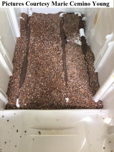 Worms For Worm Farms And Fishing Bait 2 fridge drain gravel